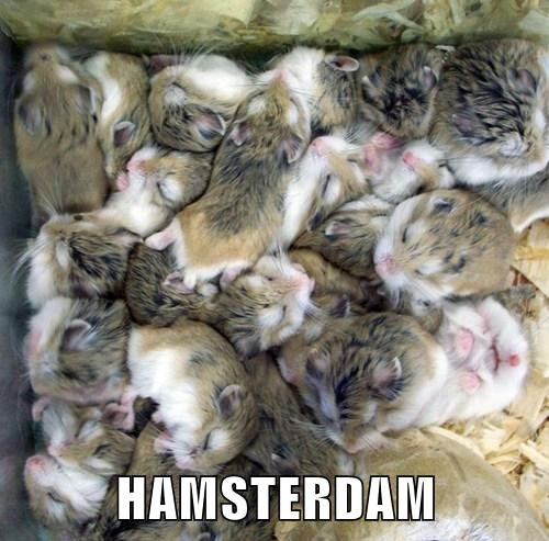 puns cute hamsters funny - 8208246784