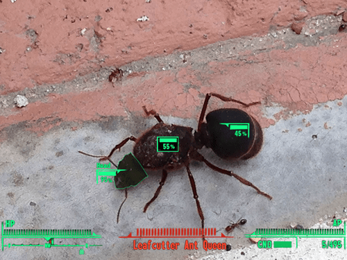 IRL ants fallout 3 - 8208399872