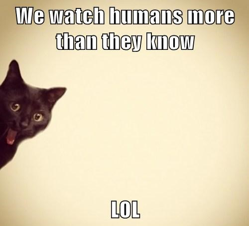 We watch humans more than they know LOL