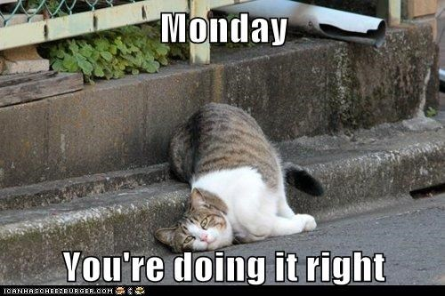 monday thru friday,lazy,Cats