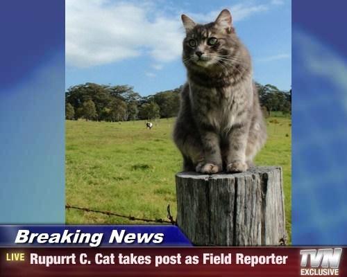 news puns Cats - 8208752384