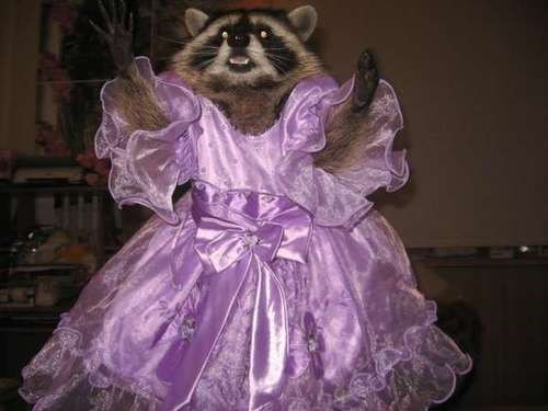 poorly dressed raccoon dress