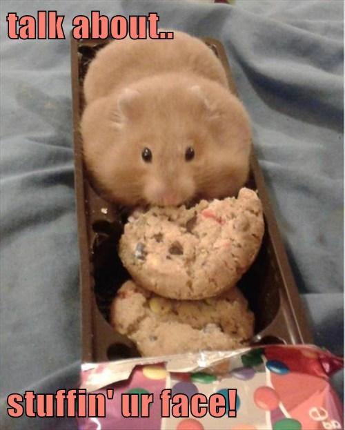 hamsters cookies - 8208991488