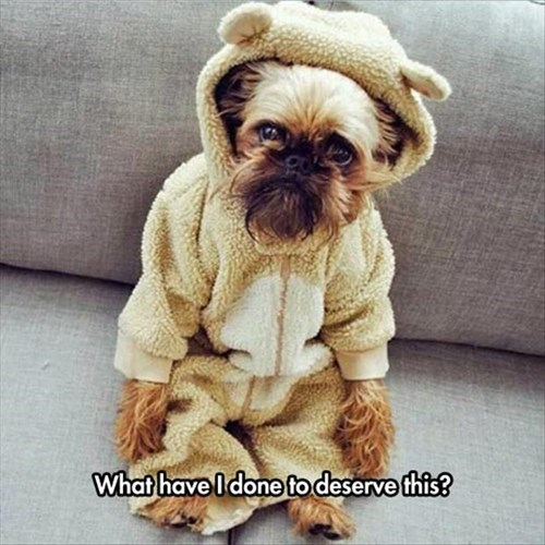 teddy bear,dogs,onesie,poorly dressed