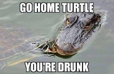 go home you're drunk turtles aligator