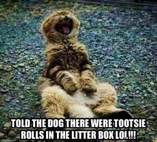 dogs gross litter box Cats - 8209099264