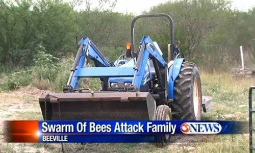news headline bees Probably bad News fail nation g rated - 8209140480