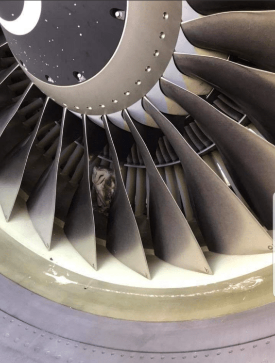 Owl nest found inside jet engine of massive airliner