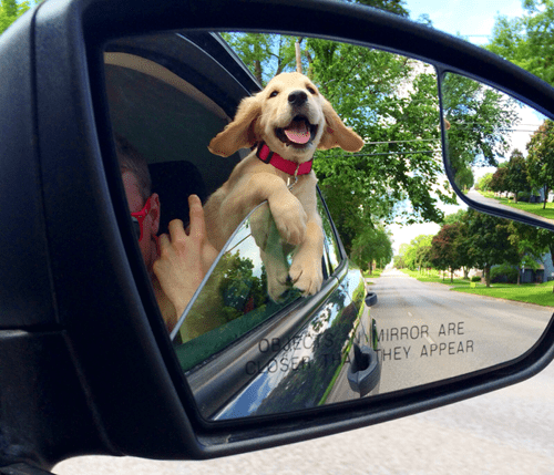 puppies cute car ride - 8209166336