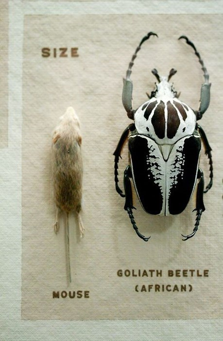 size funny Beetles mouse - 8209204736