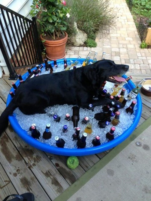 beer dogs summer - 8209212928