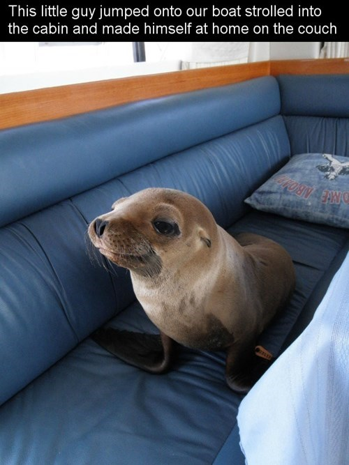 claimed it,seal,funny,boats