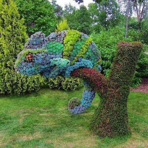 mother nature ftw,design,chameleon