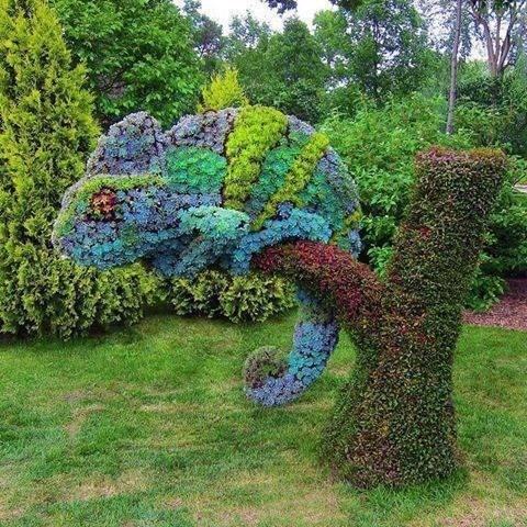 mother nature ftw,design,chameleon