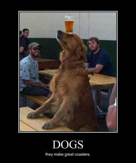 dogs,coasters,funny,animals