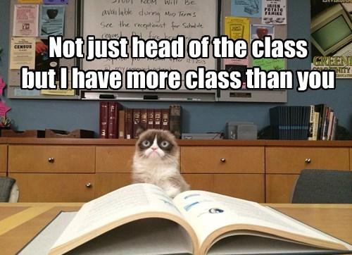 school,puns,Cats,funny