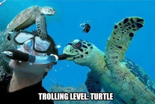 diving turtles - 8210201856