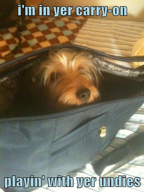 i'm in yer carry-on  playin' with yer undies