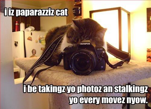cameras Cats paparazzi - 8210220288