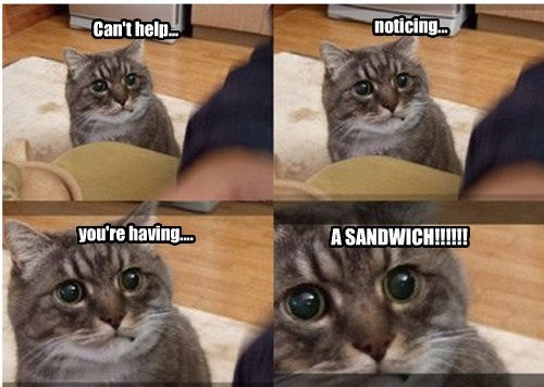 noms beg Cats funny - 8210232320