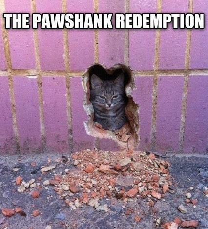 shawshank redemption,movies,puns,Cats