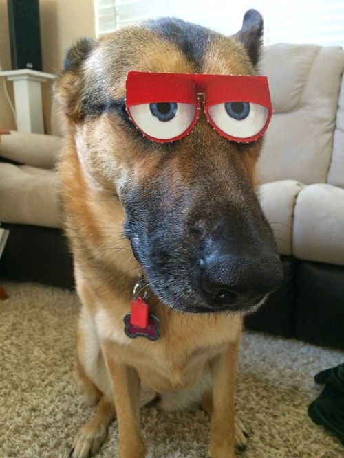 dogs expression not amused - 8210274560