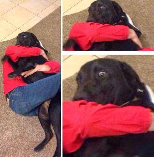 dogs,shocked,hug