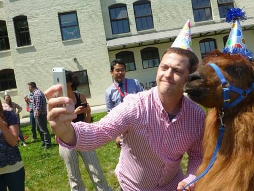 llama selfie animals - 8210348032