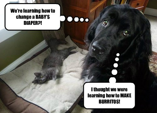 Cats dogs confused class - 8210674688