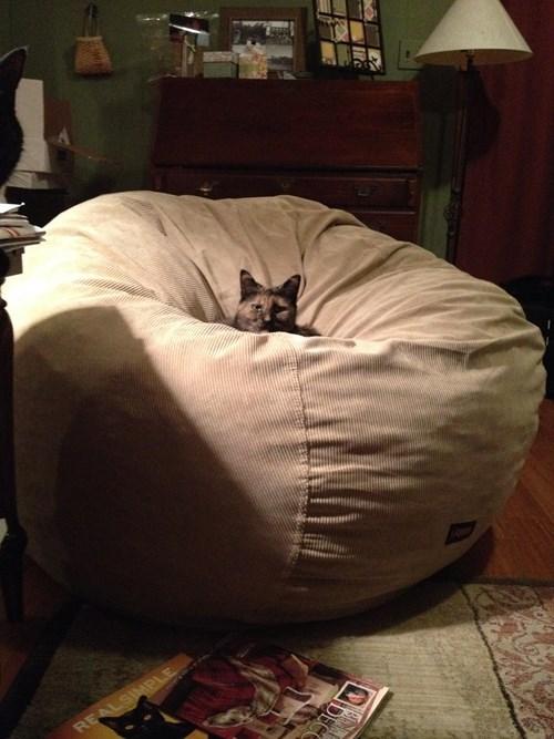 Cats,beanbag,mine