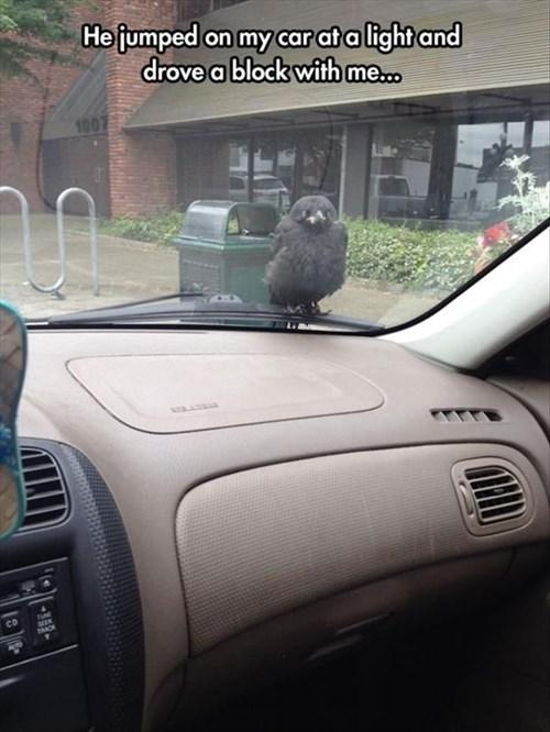 cars birds funny - 8211132416