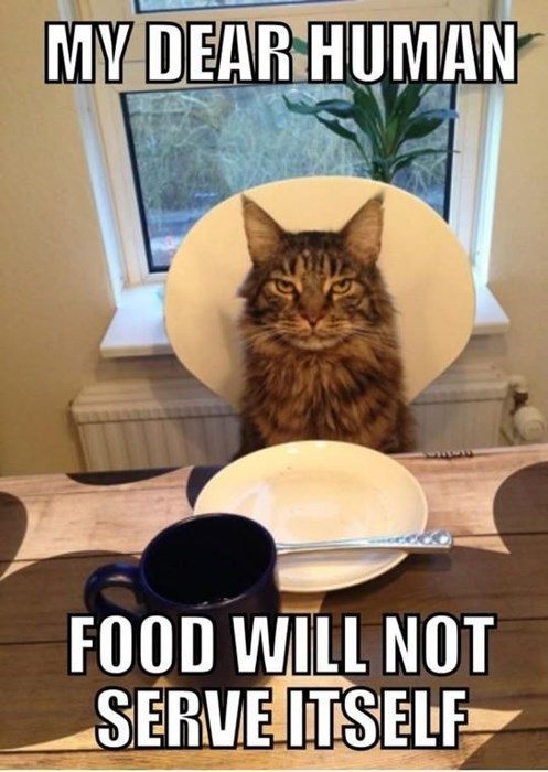Cats,food,human