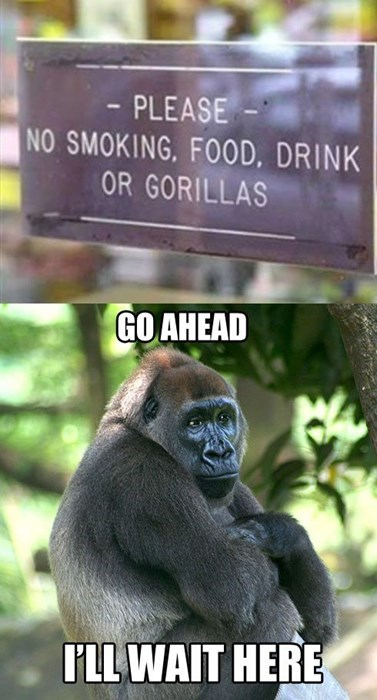 gorillas,signs,waiting