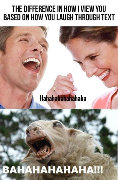 laughing sheep texting - 8211147264