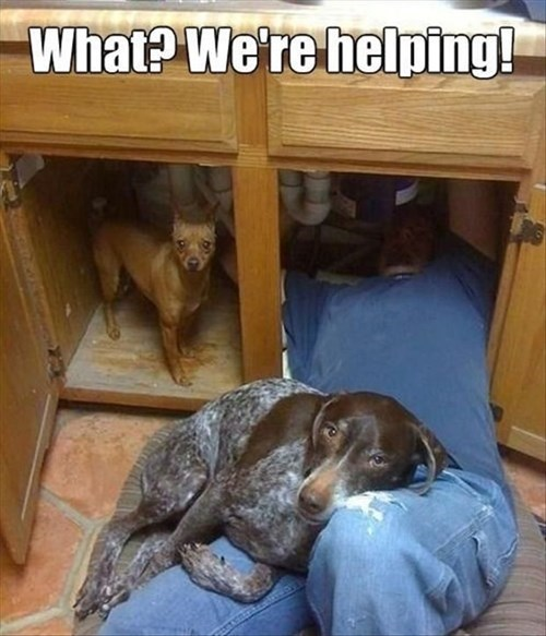 dogs helping plumbing