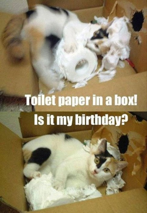 a white cat inside a cardboard box ripping up a roll of toilet paper happy birthday meme