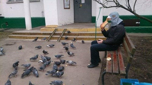 pigeon mask,pigeon,poorly dressed,mask