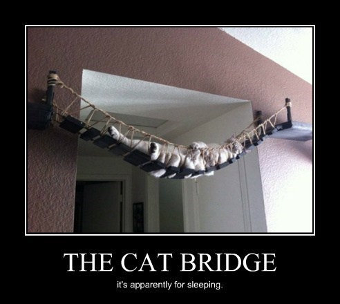 wtf,bridge,Cats,funny
