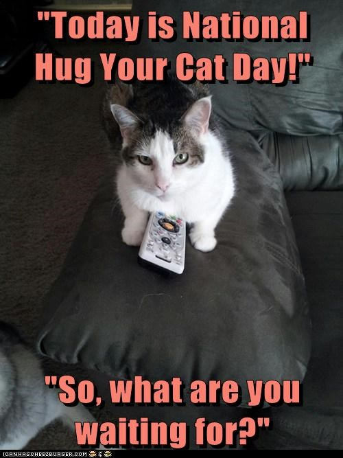 """Today is National Hug Your Cat Day!"""" """"So, what are you waiting for?"""" -  Lolcats - lol 