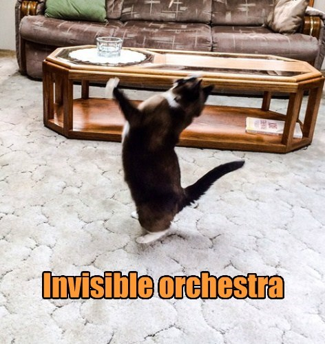 Music invisible Cats - 8211386624
