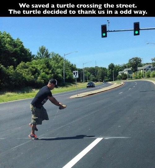 random act of kindness,gross,turtle