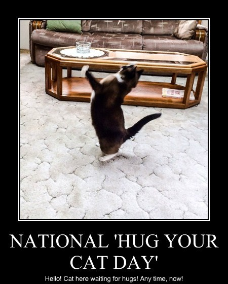 NATIONAL 'HUG YOUR CAT DAY' - Lolcats - lol | cat memes | funny cats |  funny cat pictures with words on them | funny pictures | lol cat memes |  lol cats