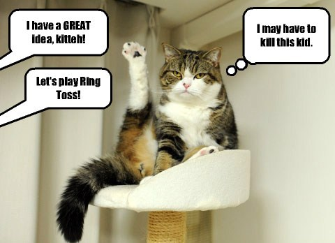 annoyed games Cats funny - 8211482368