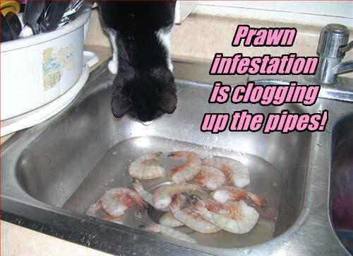 Cheezburger Image 8212067072
