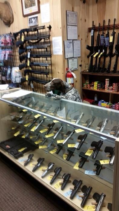 guns dogs - 8212087552