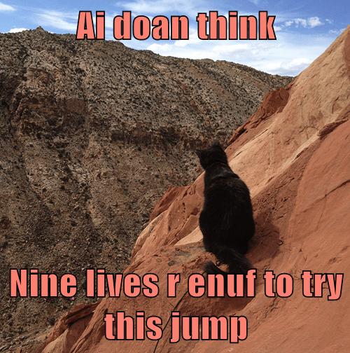 9 lives cliffs Cats - 8212173312