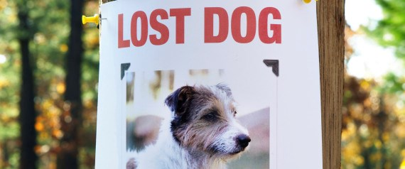 pet ownership dogs guide lost dog - 8212229
