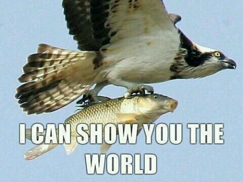 birds,fish,flying