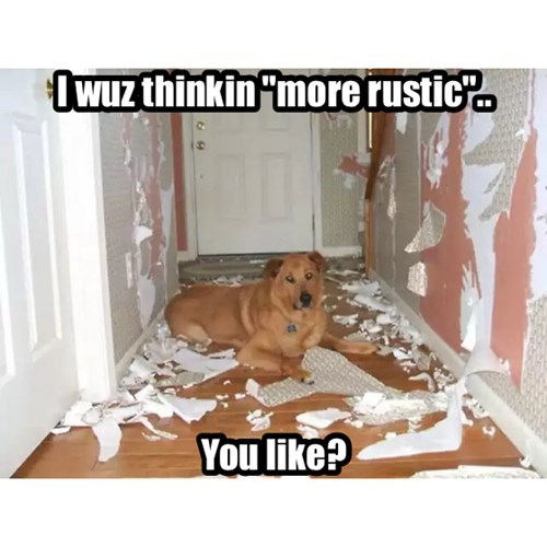 dogs interior design - 8212858624