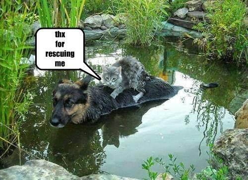 dogs friends cute Cats rescue - 8213225728